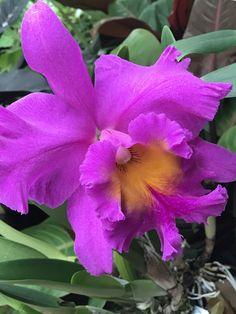 Atlanta Botanical Garden, Botanical Gardens, Beautiful Roses, Plants, Flora, Plant