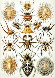 insects - Google Search