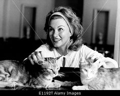 Download this stock image: Actress Linda Christian plays with two cats - E1192T from Alamy's library of millions of high resolution stock photos, Stock Photo, illustrations and vectors.