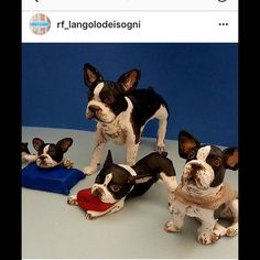Thanks to Rita fedele for her Good work !!!!! For xmas i received My Romeo's Collection ! @rf_langolodeisogni #ritafedele #napoli #creativadinapoli #womanstyle #creativelife #bulldog #frenchbulldog #frenchbulldogs #ilovefrench #ilovebully #bullylife #ilovemydog #iloveyou #iloveit