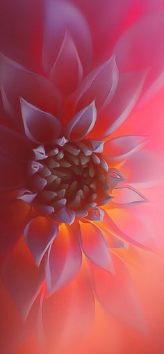 A Dahlia macro shot. Great for stone painting. A Dahlia macro shot. Great for stone painting. Flor Iphone Wallpaper, Flower Wallpaper, Nature Wallpaper, Fashion Wallpaper, Pink Wallpaper, Wallpaper Ideas, Phone Wallpapers, Nature Photography Flowers, Macro Photography