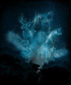 totems animal spirit guides
