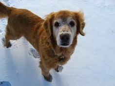 Twice a year veterinary exams are recommended to help keep your senior pets (like Dylan) healthy.
