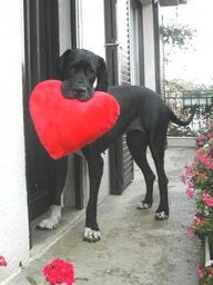 #DOG: Your Valentine's day gift - http://www.dunway.com