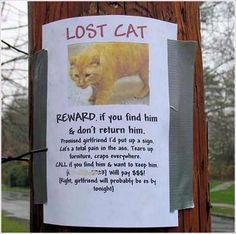 Looks Like Someone Is A Dog Person Missing Cat Poster Lost