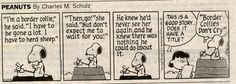 oh happy day -  Charles Schulz knew dogs - he had a border collie :)