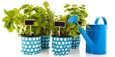 Pěstujete byliny? Nemáte-li zahradu, poslouží vám k tomu i balkon, či dokonce jen okenní parapet. Váháte, jaké bylinky vybrat? Inspirujte se seznamem deseti u nás nejpěstovanějších druhů, jež využijete při přípravě jídel i léčebných prostředků. Planter Pots, Herbs, Deco, Garden, Knowledge, Garten, Lawn And Garden, Herb, Decor