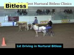 Bitless Driving in the Nurtural Bridle - Enjoy these videos and photos of: • A Norwegian Fjord mare line-driven then in a cart, bitless for the first time,  • A Morgan stallion line-driven • Two minis in carts - no bits! No blinders! No checks! No problems!  Photos include cantering through cones at a competition, another mini, a custom made really big driving bridle and 2 racing standardbreds.