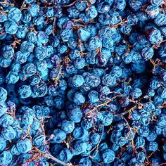 Grapes for Amarone by Vinexxperts