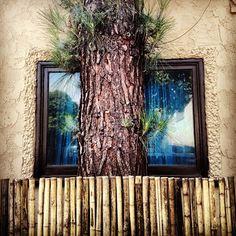 #treesandhedges