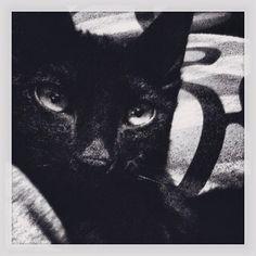 I love this boy :3 #black #cat # kitten #kitty #babyboy #blackcat #blackkitty #blackkitten #yelloweyes