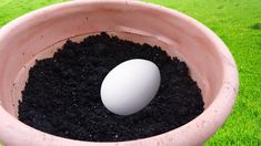 In this video, I'm going share with you a genius life hack for the garden! Bury an egg in your garden soil and what happens a few days later will surprise yo. Growing Herbs, Growing Vegetables, Growing Up, Container Gardening, Gardening Tips, Sustainable Farming, Garden Pests, Garden Care, Types Of Soil