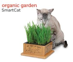 Treat your cat to this purr-fect organic kitty garden from Petco's Holiday Gift Guide.