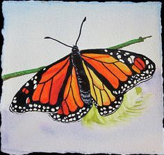 Butterfly Painting by Teresa Beyer - Butterfly Fine Art Prints and Posters for Sale
