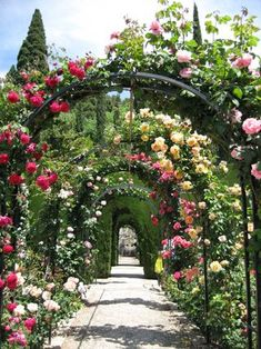 Gardens at the Alhambra, Grenada, Spain...some of the most beautiful roses I have ever seen.
