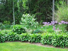 Lumipalloheisi, pallolaukka, kuunlilja Outdoor Balcony, Shade Garden, Perennials, Backyard, Plants, Beautiful Gardens, Garden Ideas, Outdoors, Gardening