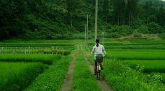 Komori (Japan) - movie Little Forest