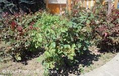 Gardeners Services Barnes