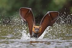 Yes another flying fox but judging on people's comments they are popular so I am posting another.