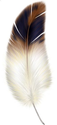 Brown and White Feather Clipart