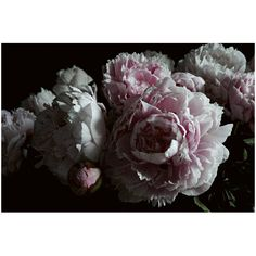 At the French Bedroom Company, we've got a vibrant collection of French wall art & decor just waiting to be discovered. Choose your statement style today Pink Peonies, Pink Flowers, Canvas Wall Art, Wall Art Prints, French Walls, Peony Print, Ornate Mirror, Statement Wall, Soft And Gentle