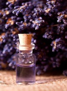 E Lavender Fantastiche OliiHealthCream 61 Immagini Su xoerdCBW