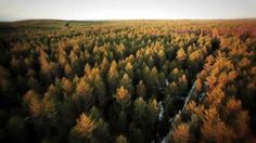 3 min metsäteollisuuden kestävä kehitys