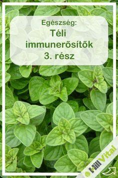 Oregánó Az oregánó illóolaja gyógyító és immunerősítő tulajdonságairól ismert. A benne lévő gombaellenes, antibakteriális, vírusellenes és parazitaellenes vegyületek gátolják a fertőzéseket. Az oregánó fő hatóanyagai lehetővé teszik, hogy számos baktériumtörzs ellen alkalmazható a növény. Gym Workouts, Anti Aging, Spinach, Paleo, Herbs, Medical, Vegetables, Healthy, Food