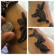 The CUTEST super tiny baby sea turtles, by Half Pint! D'awwweh!