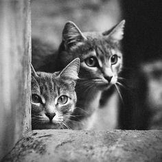 squared cat / Vladimir Zotov