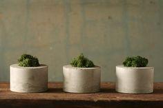 concrete moss trio $35