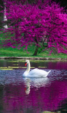 Graceful at Spring Grove Cemetery in Cincinnati, Ohio • photo: Mark Dumont on Flickr