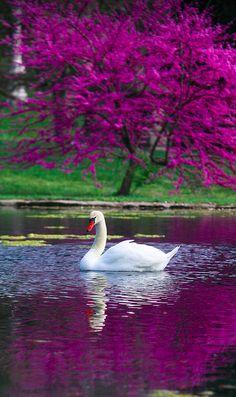 Graceful at Spring Grove Cemetery in Cincinnati, Ohio • photo: Mark Dumont on Flickr