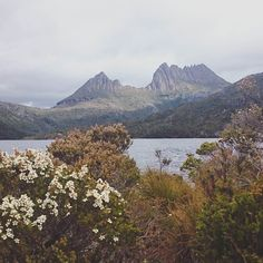 All this moody weather is making me reminiscent of my time in Tasmania camping near Cradle Mountain. It's also getting me super excited about my trip to the Canadian rockies next week!