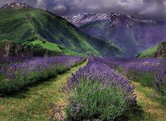 ✿ wonder where on earth this pasture resides?...