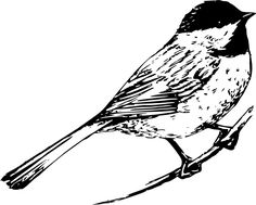 Black And White Bird Clipart Line Art Ideas Black And White Birds, Black And White Drawing, Black And White Pictures, White Art, Vogel Clipart, Bird Clipart, Chickadee Tattoo, Bird Line Drawing, Sparrow Drawing