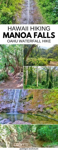 Best waterfall hikes on Oahu. Waterfalls hiking trails. Manoa falls trail. Oahu Hawaii vacation ideas planning tips.
