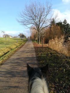 Gypsy Horse, Country Roads, Horses, Horse