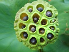 Trypophobia may be moving out of the urban dictionary and into the scientific literature.  A recent study in the peer-review journal Psychological Science takes a first crack at explaining why some people may suffer from a fear of holes.