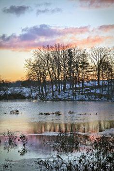 ✯ Winter Wetlands