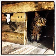Wooden Pallet Cat House   Pallets Designs