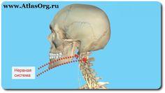 ✔ ПОДВЫВИХ АТЛАНТА   Атлант - первый шейный позвонок на котором крепится голова. Через атлант проходят все жизненно важные каналы организма человека как нервной, так и кровеносной системы.  Подвывих атланта - это диагноз более чем 95 % населения.  В результате этого смещения происходит пережатие жизненно важных каналов в теле человека. Итог: возникают множественные отклонения во всём организме, от работы внутренних органов до искривления костей скелета.  http://atlasorg.ru