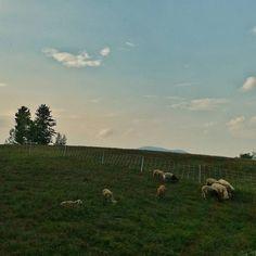 Good night from Studio Hill. #sunset #sheep #regenerativeagriculture #farming #vt #Vermont