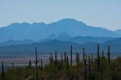 saguaro - Cerca con Google