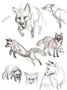foxes from reference