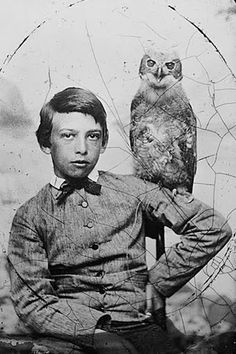 Boy with Owl Victorian Vintage Photography Weird Spooky Unusual Black White or Sepia from Old Photo Print Cute Pet Creepy Charming Halloween