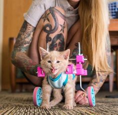 This kitten in a wheelchair http://ift.tt/2rNQovI