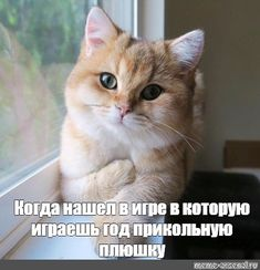 прикольный мемы про игры– Google Поиск Fluffy Kittens, Fluffy Cat, Kittens Cutest, Cute Cats, Gaming Memes, Cats Of Instagram, Cat Lovers, Kitty, Backgrounds