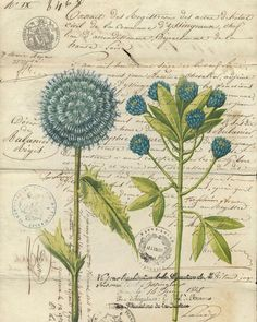 Botanical Print Blue Flower