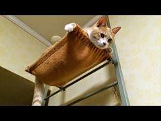 2秒でバレる嘘をつく猫『僕、ムササビですぅ』;猫おもしろ動画